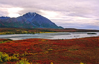 Brilliant fall wetland area on the Denali Highway between Paxon and Cantwell