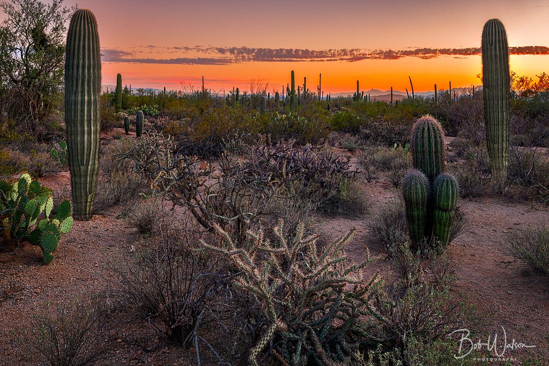 Sunset at Saguaro National Park, Arizona