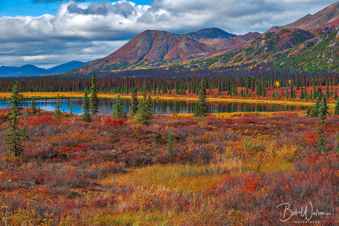 """Denali Autumn"", Denali National Park, Alaska"