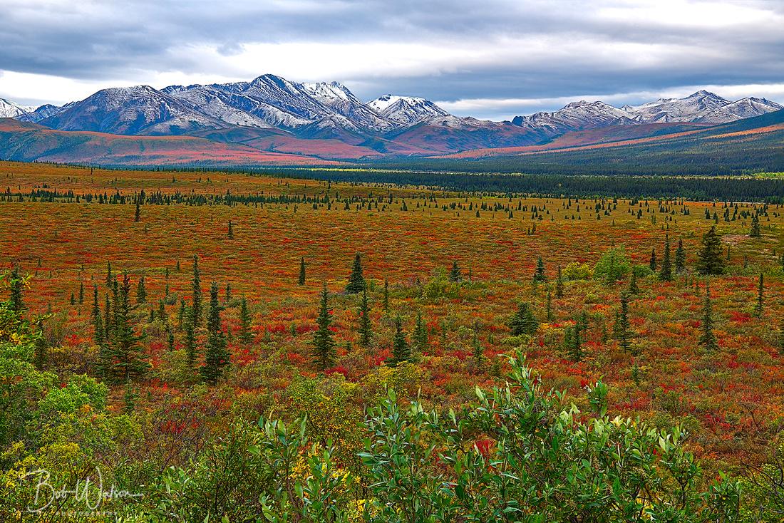 Telanika River Valley In Autumn, Denali National Park, Alaska
