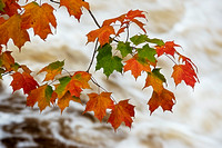 Maple Leaves overhang the Presque Isle River in Michigan's Upper Peninsula.