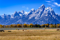 Horses graze along the Snake River in Jackson Hole Valley beneath the towering Grand Tetons