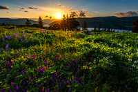 Spring Wildflowers of the Columbia River Gorge, Oregon