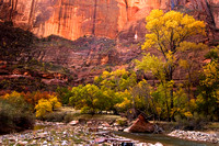 The Autumn contrasts are magnificent in Zion National Park, Utah