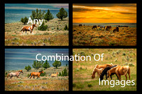 Wild Mustang Collage (Any Combination of Images)