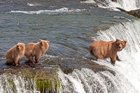 Sow Brown Bear teaches her cubs to fish at Brooks Falls