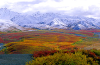 Polychrome Mountain, Denali National Park, Alaska at the peak of fall colors