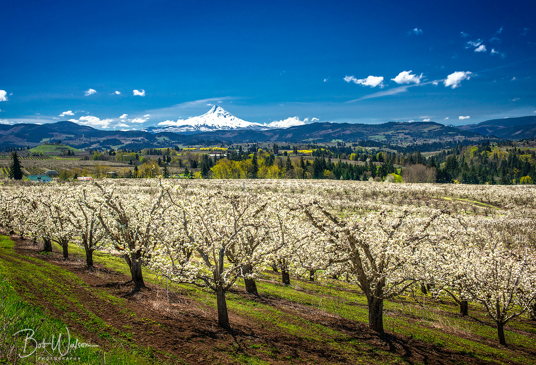 Valley of Fruit, Hood River Valley, Oregon